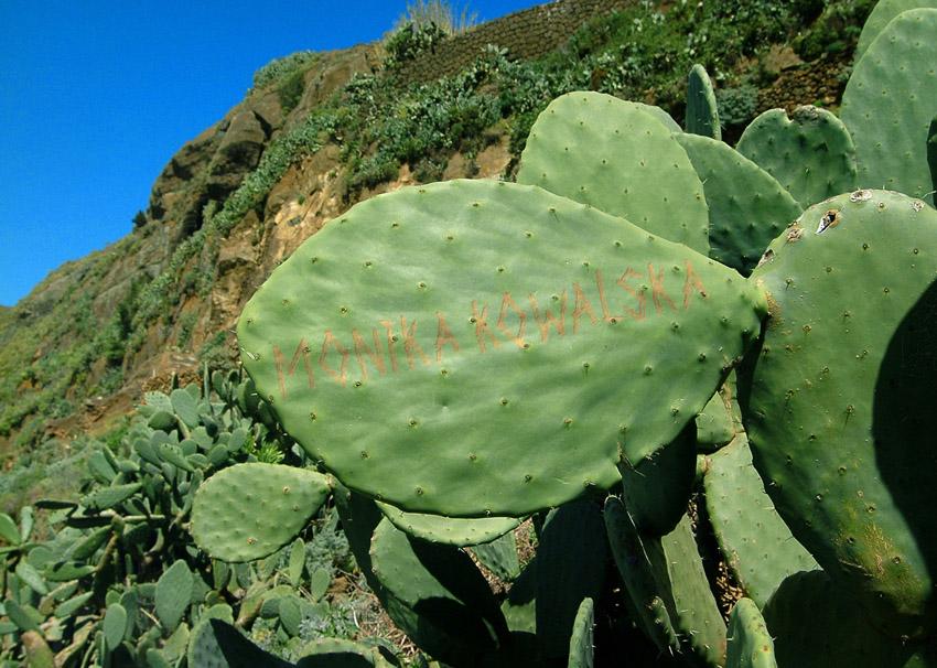 Cactus Leaf